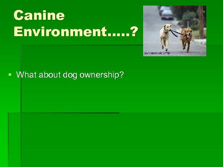 Canine Environment…. . ? § What about dog ownership?