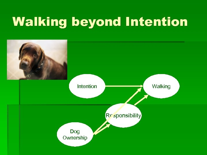 Walking beyond Intention Walking Responsibility Dog Ownership
