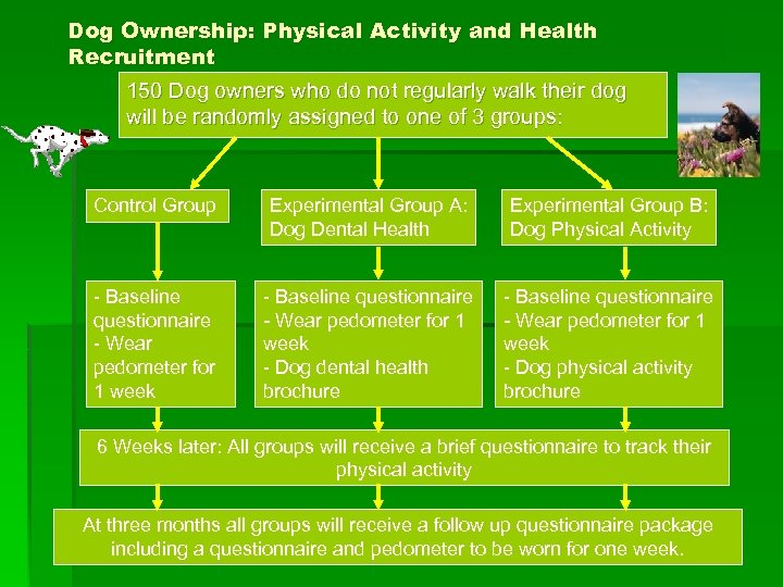 Dog Ownership: Physical Activity and Health Recruitment 150 Dog owners who do not regularly