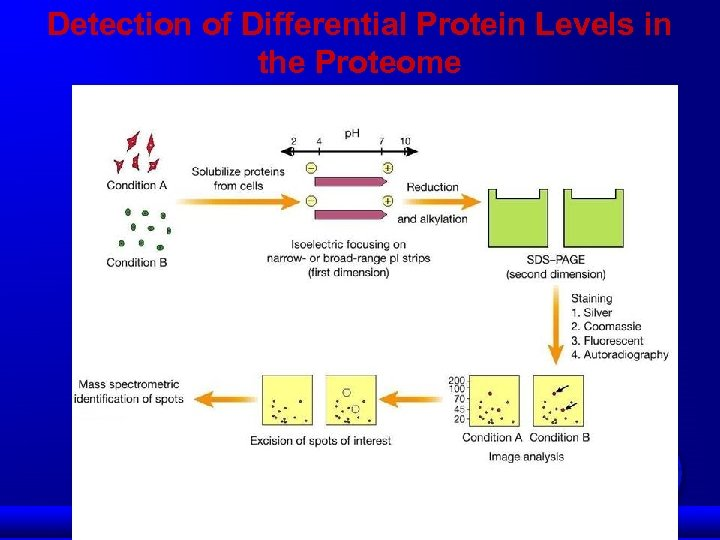 Detection of Differential Protein Levels in the Proteome