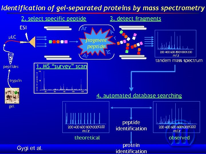 Identification of gel-separated proteins by mass spectrometry 2. select specific peptide ESI 3. detect