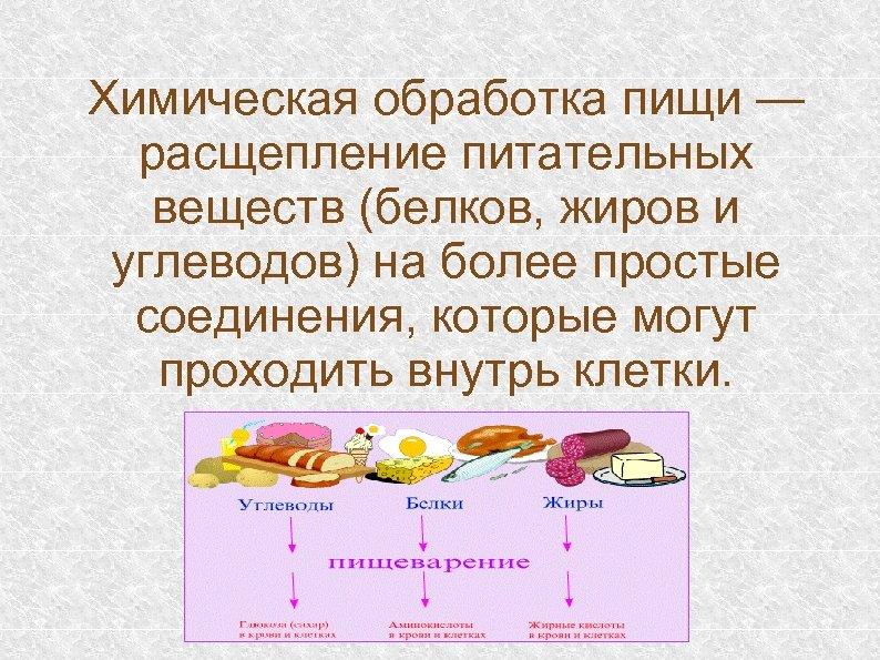 Химическая обработка пищи — расщепление питательных веществ (белков, жиров и углеводов) на более простые