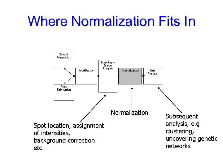 Where Normalization Fits In Sample Preparation Hybridization Scanning + Image Analysis Normalization Data Analysis