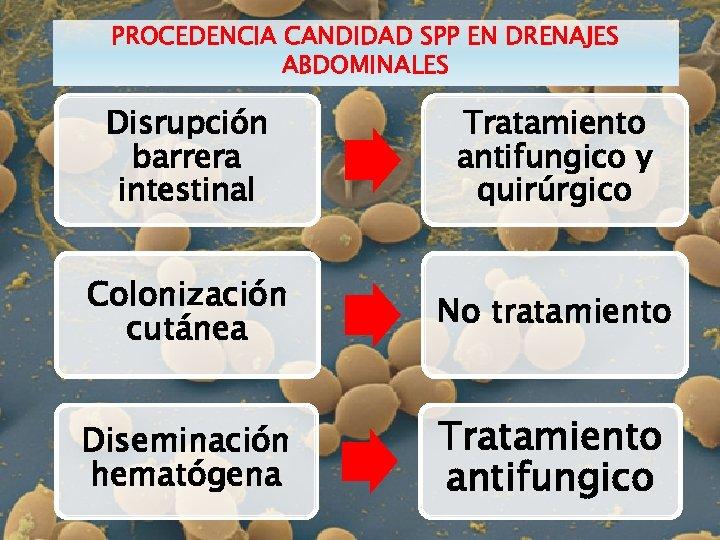 PROCEDENCIA CANDIDAD SPP EN DRENAJES ABDOMINALES Disrupción barrera intestinal Tratamiento antifungico y quirúrgico Colonización