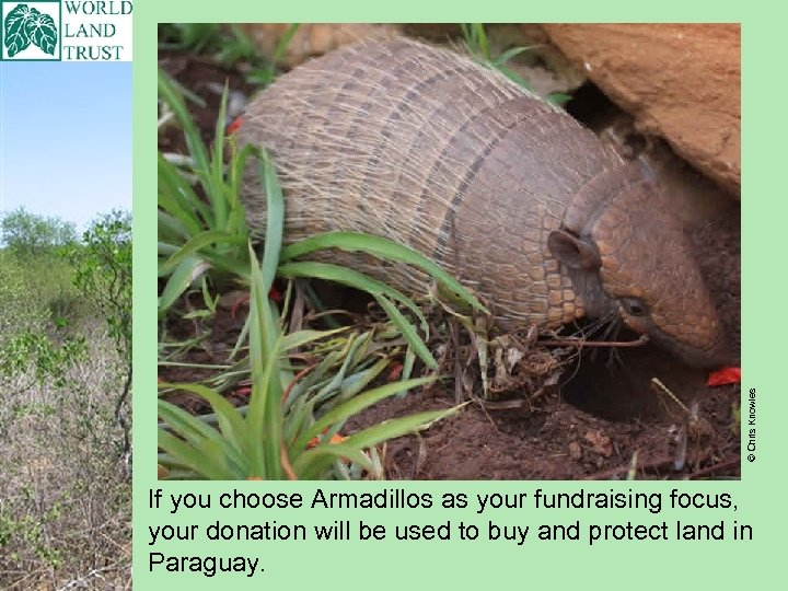© Chris Knowles If you choose Armadillos as your fundraising focus, your donation will