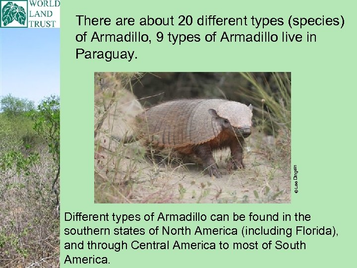 © Lee Dingain There about 20 different types (species) of Armadillo, 9 types of