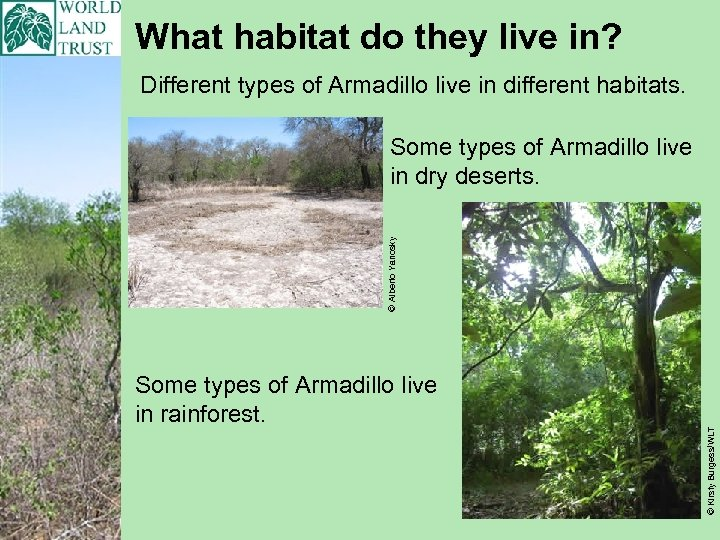 What habitat do they live in? Different types of Armadillo live in different habitats.