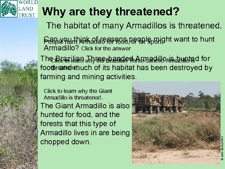 Why are they threatened? The habitat of many Armadillos is threatened. Can you think