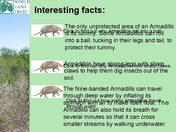 Interesting facts: The only unprotected area of an Armadillo Click to find out why