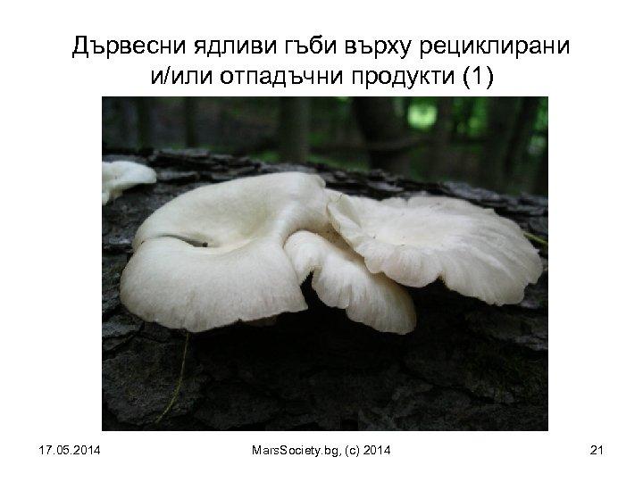 Дървесни ядливи гъби върху рециклирани и/или отпадъчни продукти (1) 17. 05. 2014 Mars. Society.