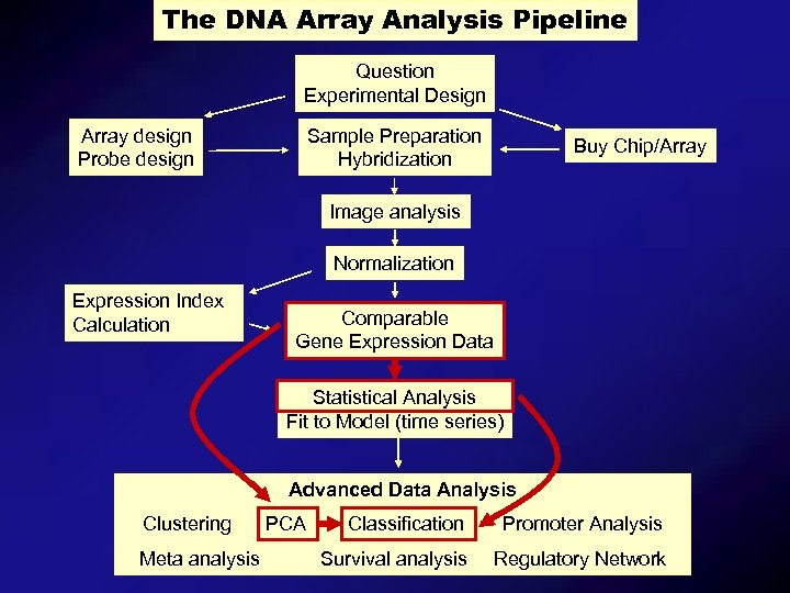 The DNA Array Analysis Pipeline Question Experimental Design Array design Probe design Sample Preparation