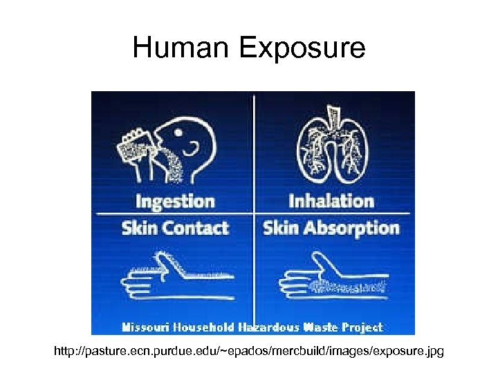 Human Exposure http: //pasture. ecn. purdue. edu/~epados/mercbuild/images/exposure. jpg