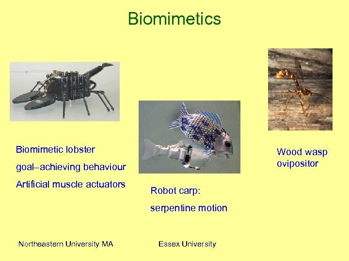 Biomimetics Biomimetic lobster Wood wasp ovipositor goal–achieving behaviour Artificial muscle actuators Robot carp: serpentine