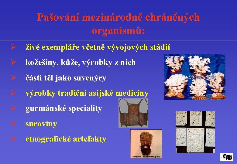 Pašování mezinárodně chráněných organismů: Ø živé exempláře včetně vývojových stádií Ø kožešiny, kůže, výrobky
