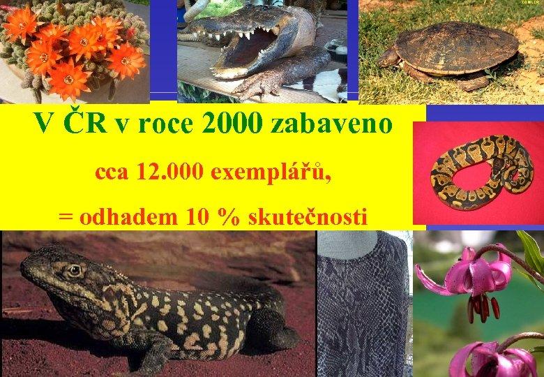 V ČR v roce 2000 zabaveno cca 12. 000 exemplářů, = odhadem 10 %