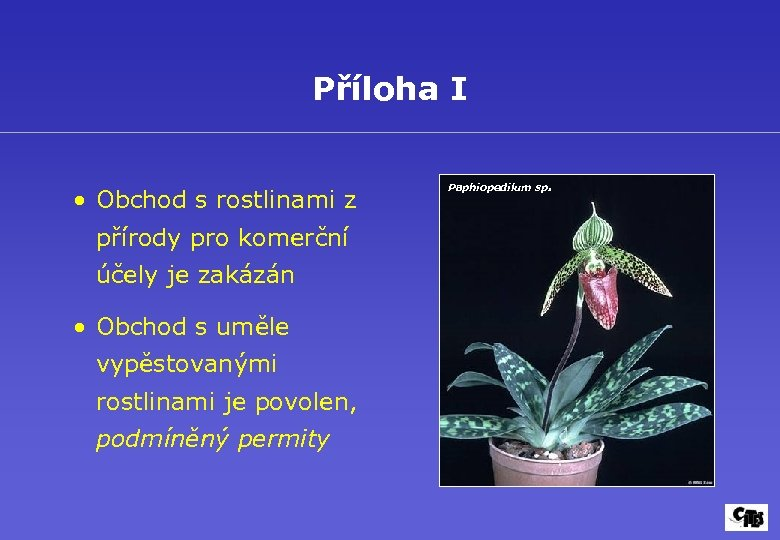 Příloha I • Obchod s rostlinami z přírody pro komerční účely je zakázán •