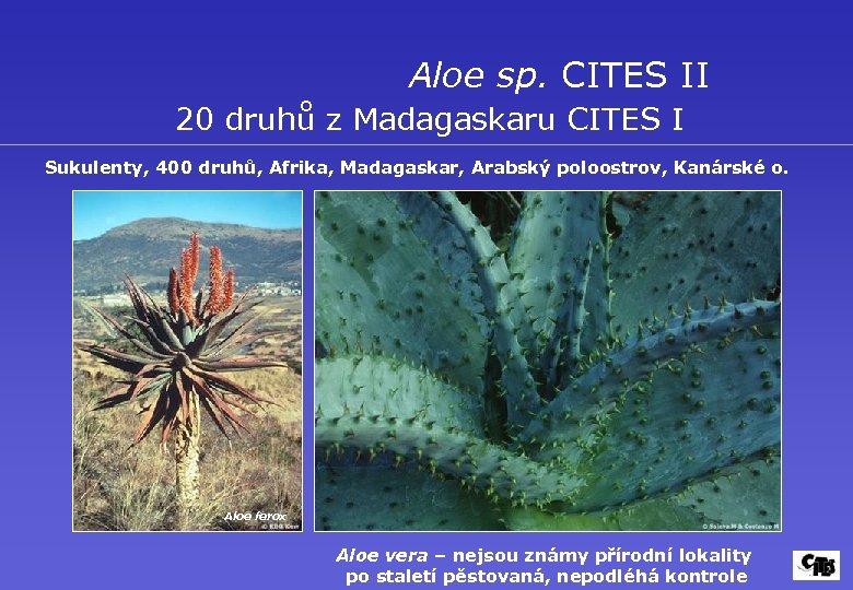 Aloe sp. CITES II 20 druhů z Madagaskaru CITES I Sukulenty, 400 druhů, Afrika,