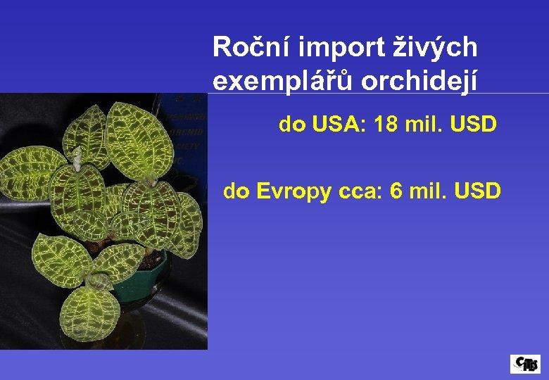 Roční import živých exemplářů orchidejí do USA: 18 mil. USD do Evropy cca: 6