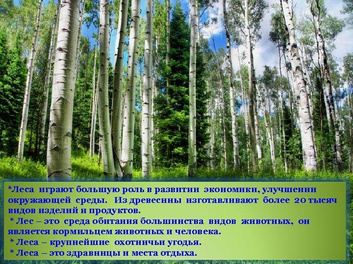*Леса играют большую роль в развитии экономики, улучшении окружающей среды. Из древесины изготавливают более