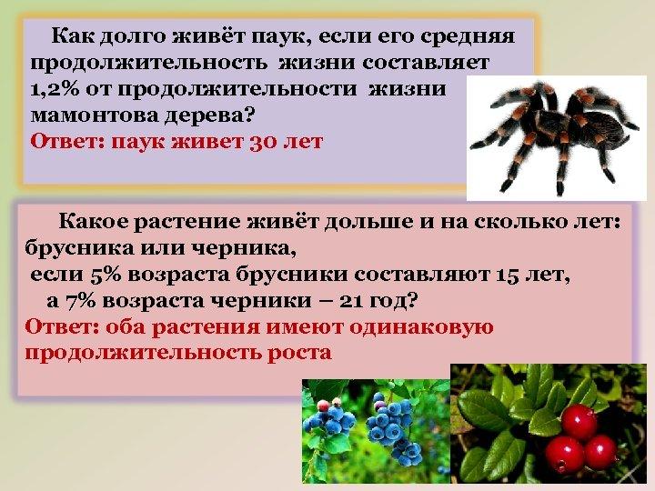 Как долго живёт паук, если его средняя продолжительность жизни составляет 1, 2% от продолжительности