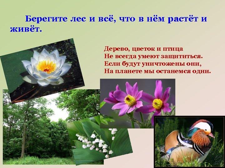 Берегите лес и всё, что в нём растёт и живёт. Дерево, цветок и птица