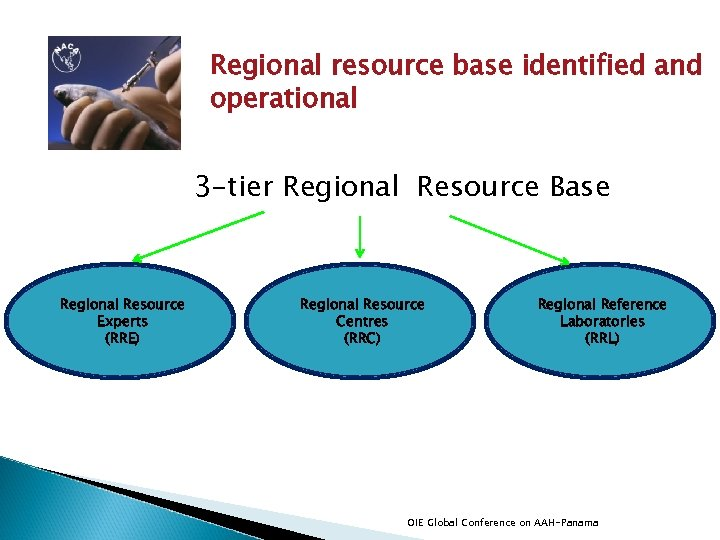 Regional resource base identified and operational 3 -tier Regional Resource Base Regional Resource Experts