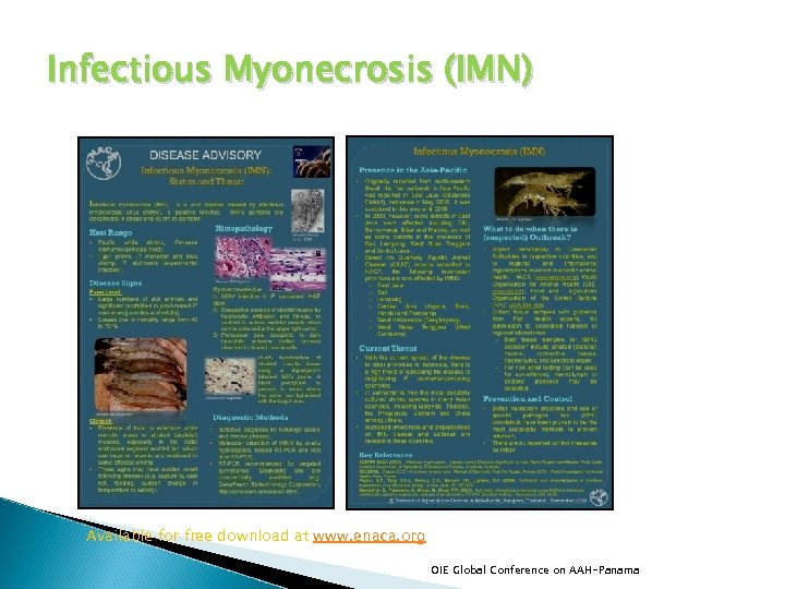 Infectious Myonecrosis (IMN) Available for free download at www. enaca. org OIE Global Conference