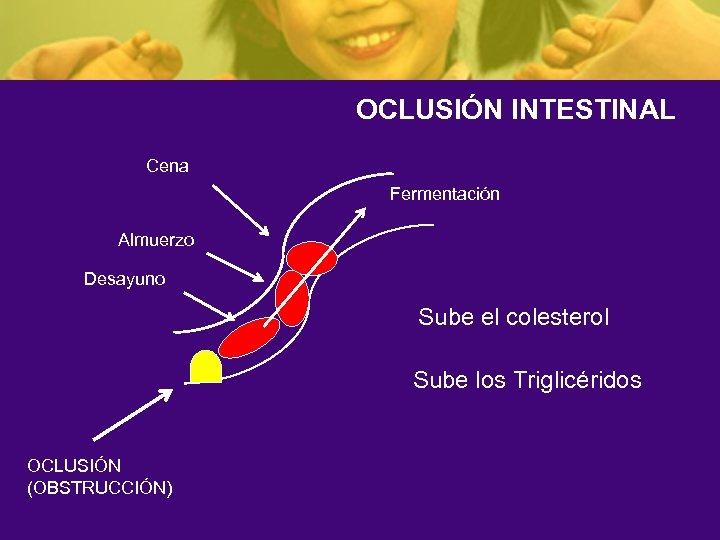 OCLUSIÓN INTESTINAL Cena Fermentación Almuerzo Desayuno Sube el colesterol Sube los Triglicéridos OCLUSIÓN (OBSTRUCCIÓN)