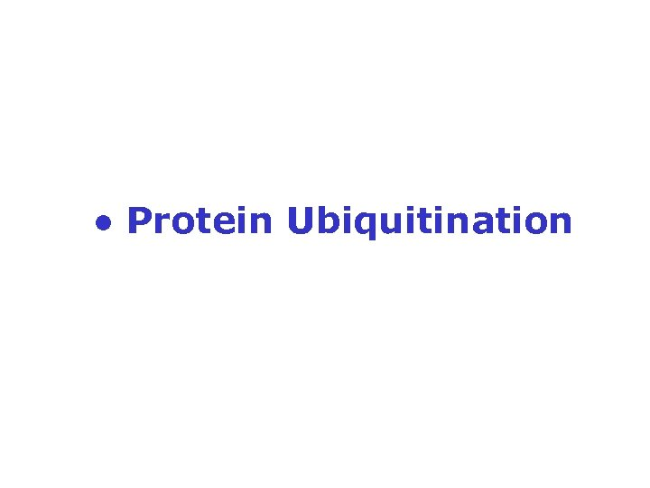 ● Protein Ubiquitination