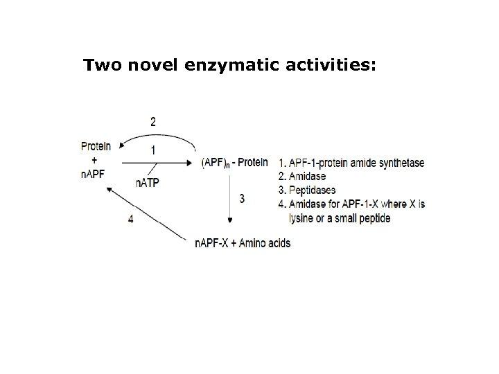 Two novel enzymatic activities: