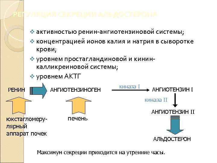 РЕГУЛЯЦИЯ СЕКРЕЦИИ АЛЬДОСТЕРОНА v активностью ренин-ангиотензиновой системы; v концентрацией ионов калия и натрия в