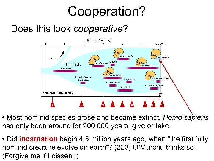 Cooperation? Does this look cooperative? • Most hominid species arose and became extinct. Homo