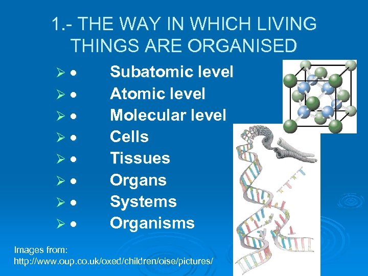 1. - THE WAY IN WHICH LIVING THINGS ARE ORGANISED Ø · Subatomic level