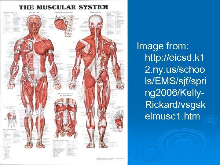 Image from: http: //eicsd. k 1 2. ny. us/schoo ls/EMS/sjf/spri ng 2006/Kelly. Rickard/vsgsk elmusc