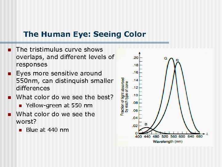 The Human Eye: Seeing Color n n n The tristimulus curve shows overlaps, and