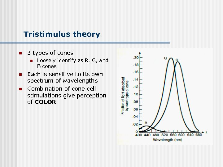 Tristimulus theory n 3 types of cones n n n Loosely identify as R,