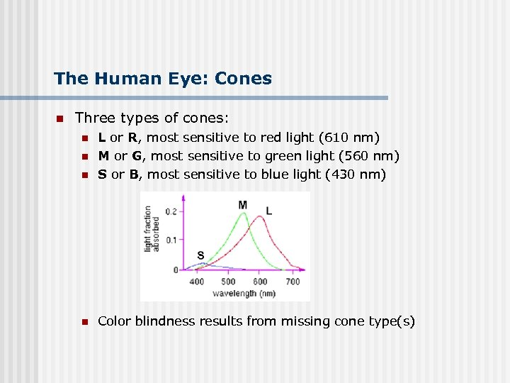 The Human Eye: Cones n Three types of cones: n L or R, most