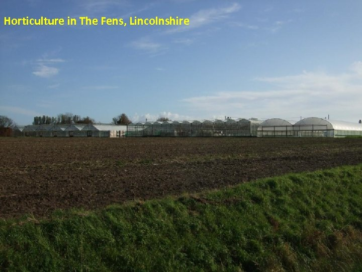 Horticulture in The Fens, Lincolnshire