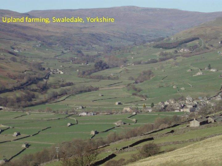 Upland farming, Swaledale, Yorkshire