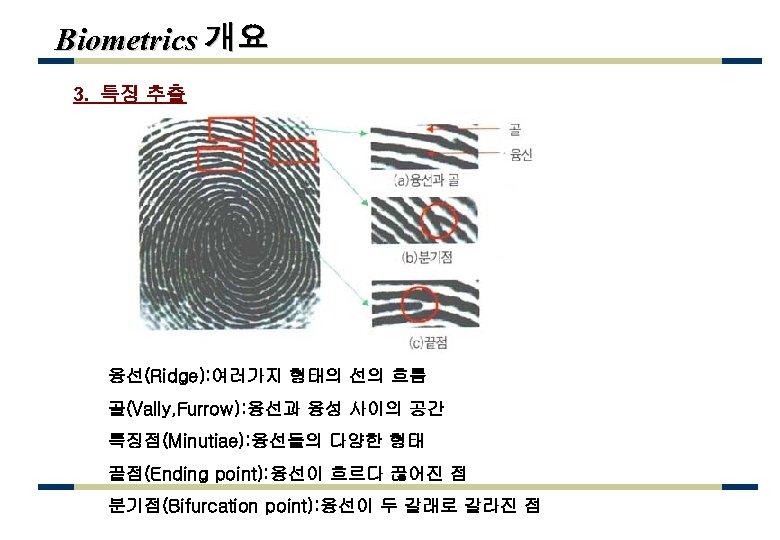 Biometrics 개요 3. 특징 추출 융선(Ridge): 여러가지 형태의 선의 흐름 골(Vally, Furrow): 융선과 융성
