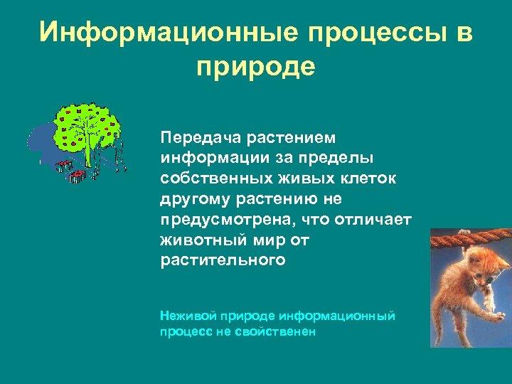 Информационные процессы в природе Передача растением информации за пределы собственных живых клеток другому растению