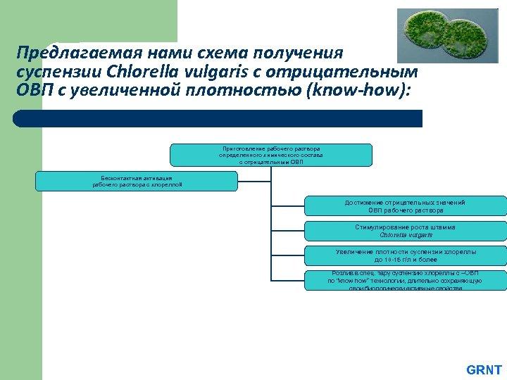 Предлагаемая нами схема получения суспензии Chlorella vulgaris с отрицательным ОВП с увеличенной плотностью (know-how):