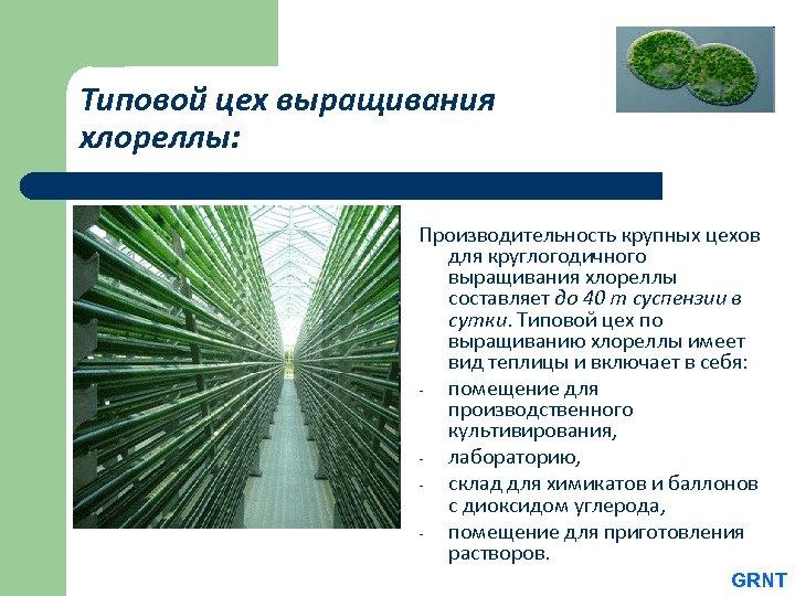 Типовой цех выращивания хлореллы: Производительность крупных цехов для круглогодичного выращивания хлореллы составляет до 40