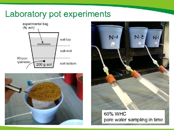 Laboratory pot experiments 60% WHC pore water sampling in time