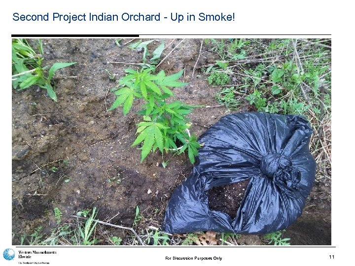 Second Project Indian Orchard - Up in Smoke! For Discussion Purposes Only 11