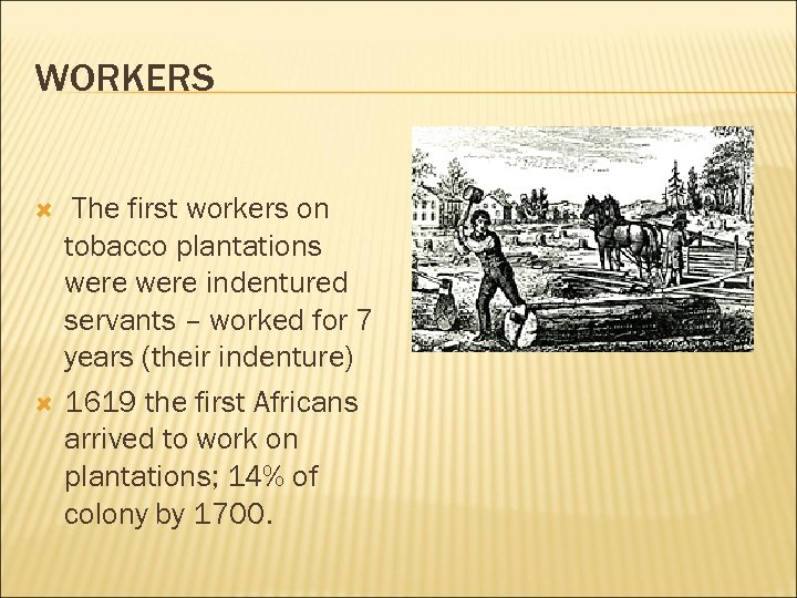 WORKERS The first workers on tobacco plantations were indentured servants – worked for 7