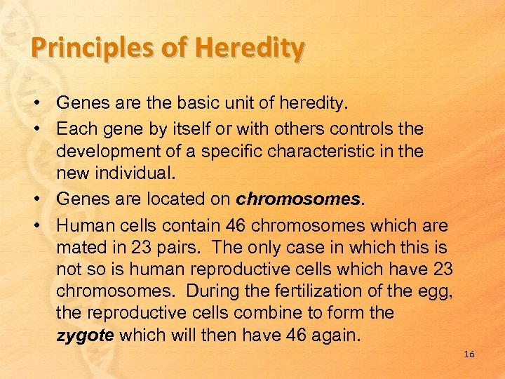 Principles of Heredity • Genes are the basic unit of heredity. • Each gene