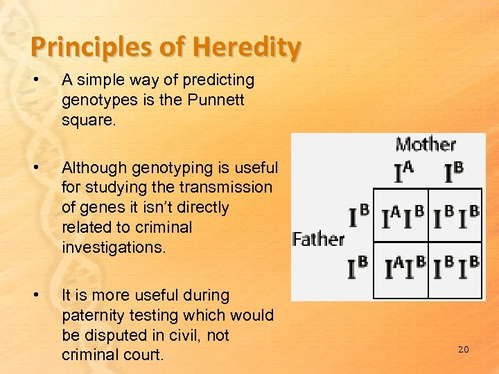 Principles of Heredity • A simple way of predicting genotypes is the Punnett square.