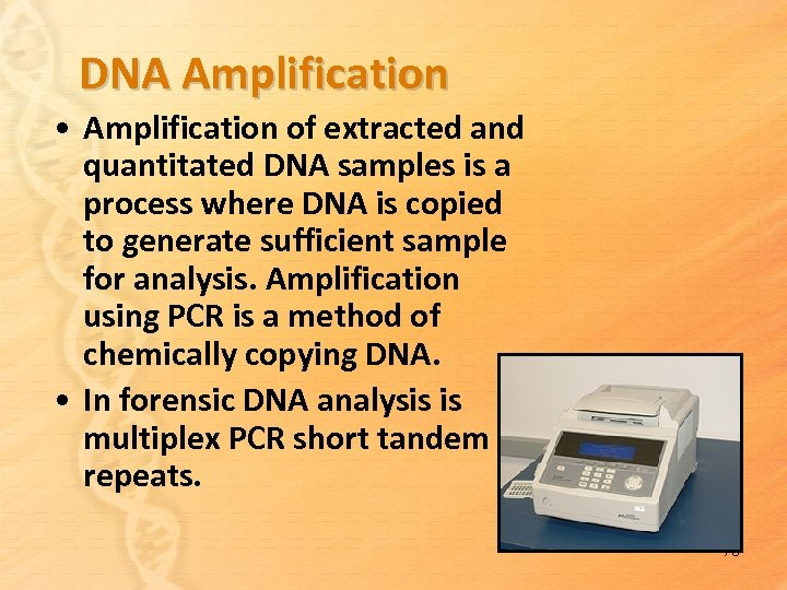 DNA Amplification • Amplification of extracted and quantitated DNA samples is a process where