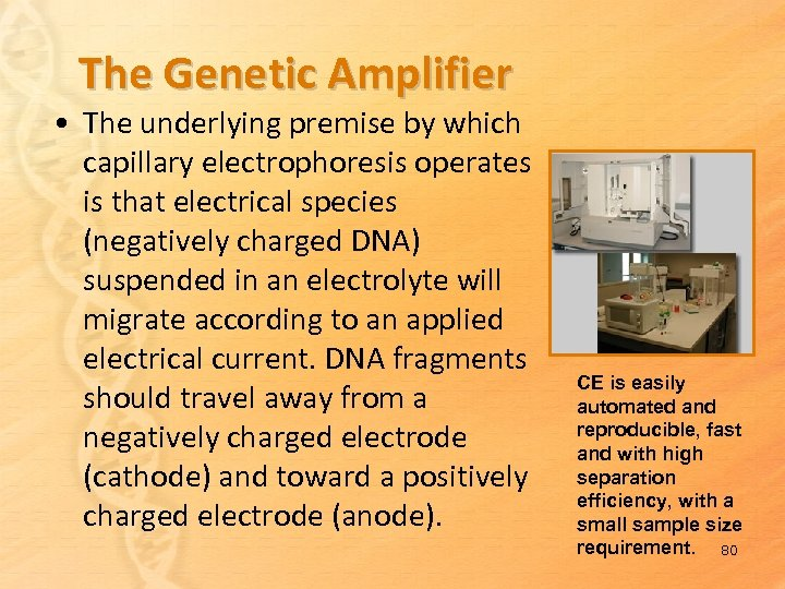 The Genetic Amplifier • The underlying premise by which capillary electrophoresis operates is that